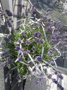 Blumen zur Eröffnung